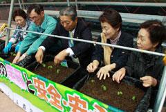 グリーンカーテンプロジェクトで「フウセンカズラ」を植え付ける高野組合長(JA仙台)