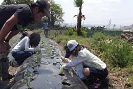 遊休農地を整備してトウモロコシ定植作業を指導
