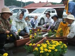 JAいわて花巻管内の被災地でボランティア活動として花作りをする遠野の農家組合のみなさん
