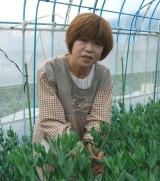トルコキギョウと野菜の栽培に生活再建を託す上野さん