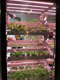 人工光による展示用のミニ栽培施設(千葉県柏市の千葉大学環境健康フィールド科学センター内)