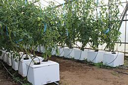 軽量で設置が容易と好評なトロ箱養液栽培システム「うぃずOne」