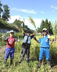 稲刈り作業で稔りの秋を体感する西仙北北小学校の皆さん。(写真提供=JA秋田おばこ)