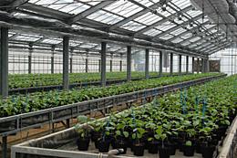 JA出資法人・ファームいずみのが管理するハウス。地域特産の水ナスの委託育苗が行っていた。定植するまで一括管理することで、その間、個々の農家は軟弱野菜などを生産しているという。役割分担で農業振興をめざしている。