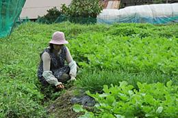 山本利江子さん(写真右)の畑。数畝ごとに異なる野菜が植えられている