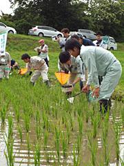 田んぼの生きもの調査。全国的にも珍しく、毎年生きものが増えているという