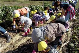 JAみえきた桑名地域所西部の子ども農業体験