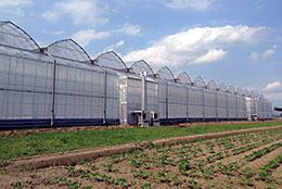 栃木県栃木市に建設中のトマト栽培の実証施設