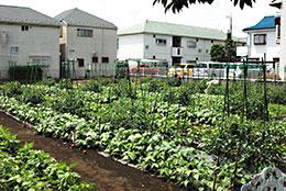 避難場所にもなる都市農地の維持には農協ががんばらなければならない