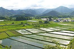 山形県高畠町の田園風景(提供はDVD「いのち耕す人々」より。配給 桜映画社)