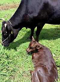 中山間地の特性生かし和牛に期待(島根県JA石見銀山提供)