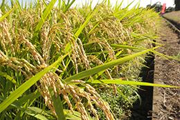 【JA全農がめざすもの】第4回米穀事業 業務用需要と安定契約 農家の経営発展めざす