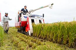 豊崎社長自ら収穫体験。JA滋賀蒲生町で。