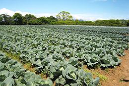 【JA全農がめざすもの】園芸総合対策部の加工・業務用野菜の取り組み 現地ルポ・JA全農三重県本部