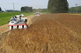 集落営農法人の稲刈りの風景
