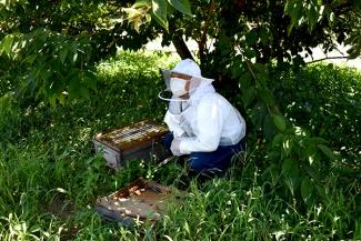 ミツバチの巣箱と渥美郡養蜂組合の河合さん