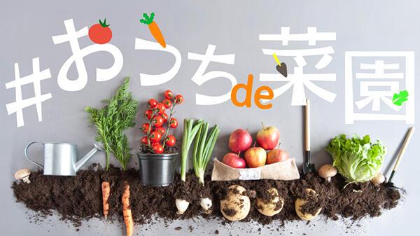 外出自粛の時間を野菜作りで充実 新サービス「おうちde菜園」開始 GreenSnap
