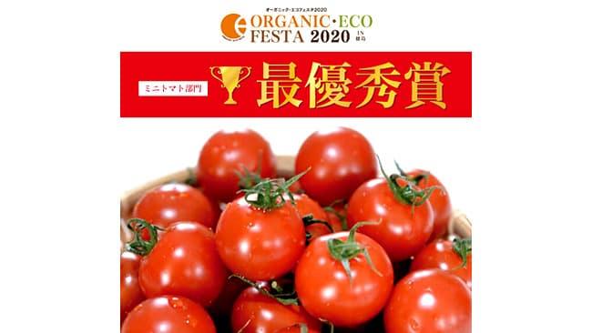 ミニトマトの野菜栄養価で最優秀賞 深作農園