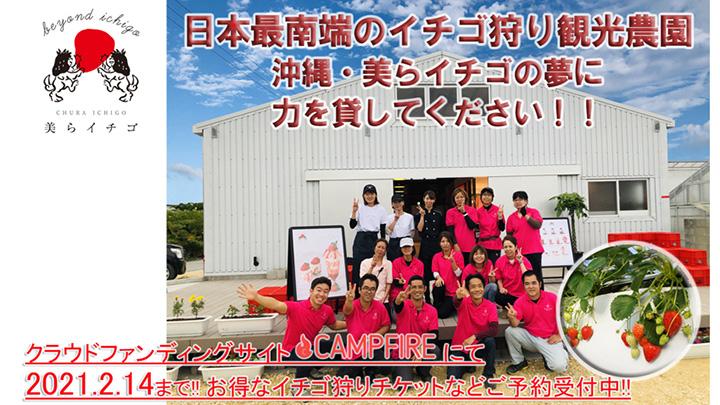 日本最南端のイチゴ狩り農園がクラウドファンディング開始 沖縄・美らイチゴ