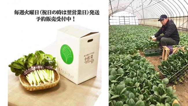 専用BOXで直送する江戸川区産の小松菜
