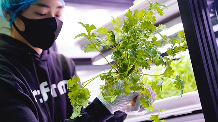 都市型農場野菜「インファーム」都内で新たに2店舗で販売