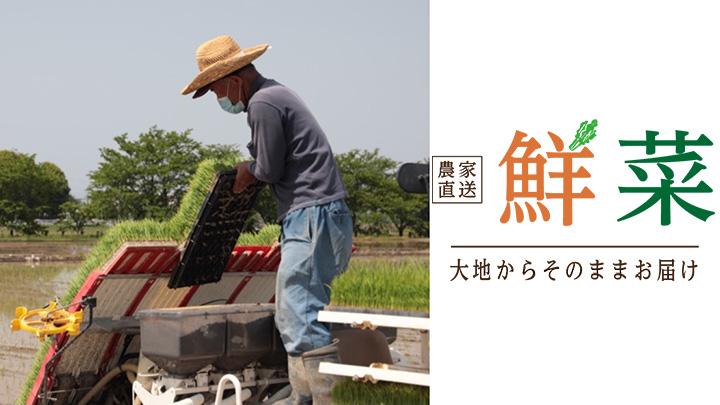 埼玉県宮代町で低農薬のお米を栽培する斉藤さん